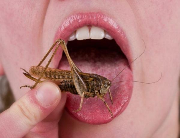 Pass the Crickets! – a #soundbites guide to entomophagy