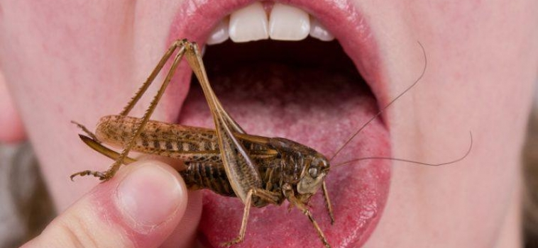 Pass the Crickets! – a #soundbites guide to entomophagy